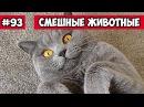 Смешные животные - игры котиков Bazuzu Video ТОП подборка 93, январь 2018