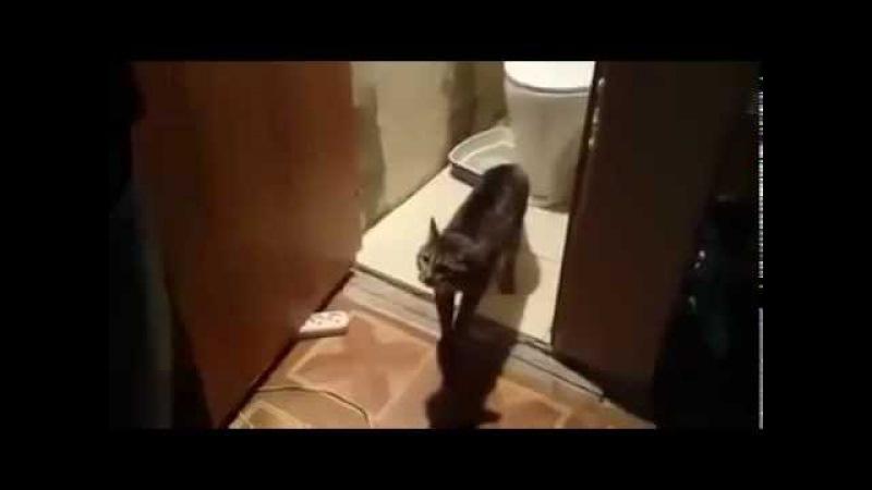 Прикол. Кот не пускает мужика в туалет.