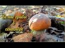 Белые грибы в сентябре Первые заморозки грибочки все спрятались Осенние опята