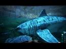 Megalodon Taming The Island / ARK Survival Evolved