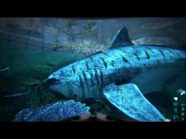 Megalodon Taming The Island ARK Survival Evolved