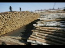 Chinas Demand Increases Illegal Logging and Deforestation