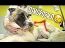 Собака замерзла в Новый год История бездомного пса и милосердия врачей