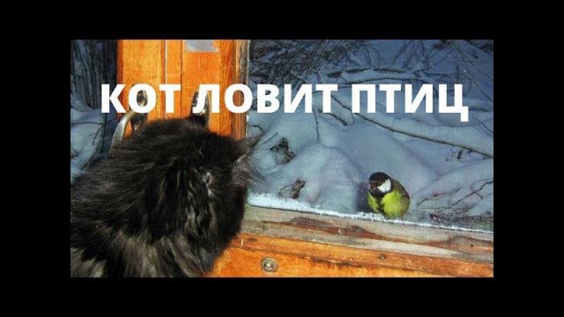 мяу мишность - кот ловит птиц, но у него не получается