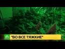 Под Петербургом ликвидировали домашнюю плантацию конопли