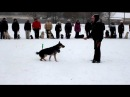Управление собакой с помощью жестов