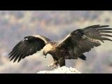 Claude Ciari - El Condor Pasa