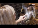 Обезьяна Соня наслаждается массажем. Смешная обезьянка | Monkey Sonya enjoys a massage. Funny monke