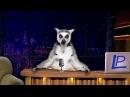 Лемур портал 1 выпуск Мир глазами животных