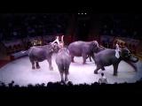 цирк слоны