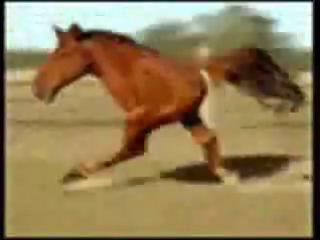Видео мужыки ебут каней
