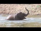 День слона в Таиланде - все на праздник