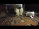 ПОЗИТИВ: Медведица приучает медвежонка к порядку на кухне (Берлин) ...