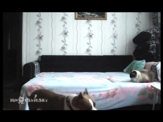 When the dog stays at home alone _ Пока никто не видит