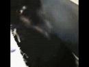 Сегодня купил этого котёнка, отдавая продавец дал лоток, осиновый кол, Библию и вискас с чесноком. Интересно, почему?