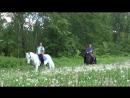 Лошади и собаки - все зависит от нас самих