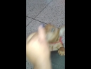 Este perrito es una fiera