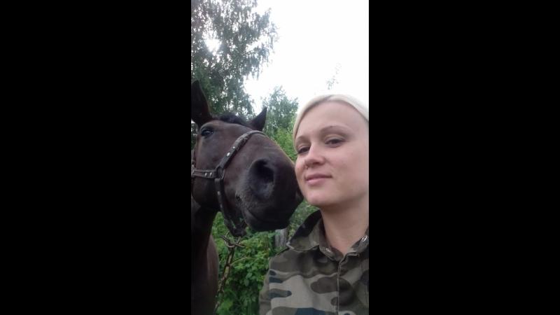 Лошадь-нюхач!