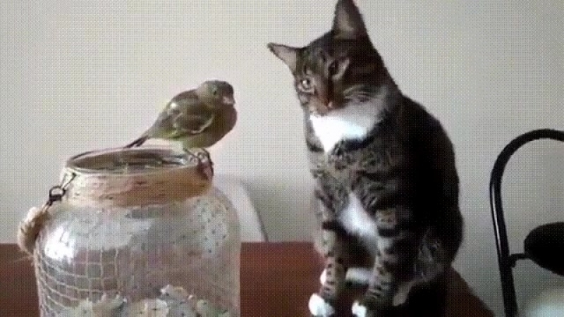 Сказали... птичку НЕ ТРОГАТЬ