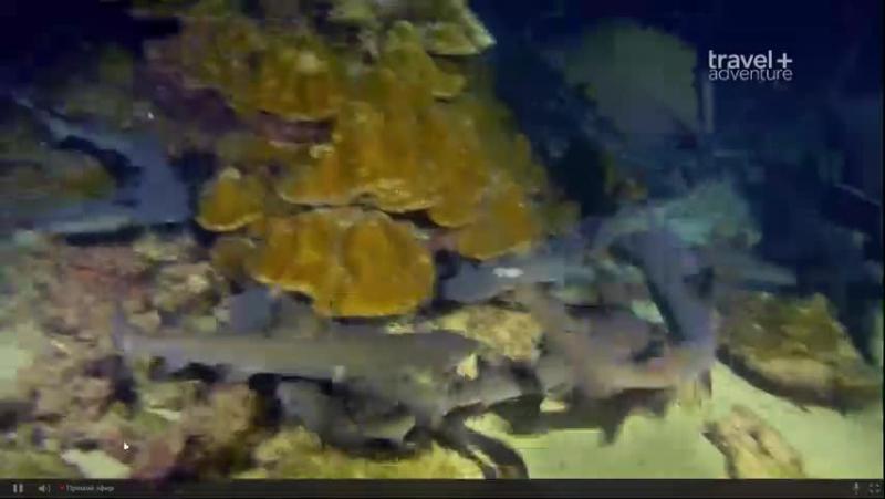 Великое подводное приключение у острова Кокос.