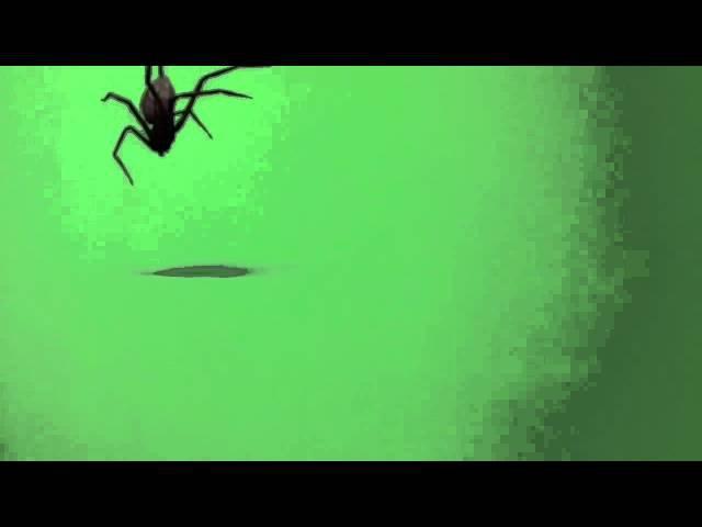 Паук футаж green screen скачать
