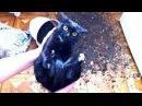 Приколы с кошками и котами 13. Подборка смешных и интересных видео с котиками и к ...