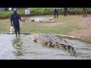 Big crocodile Papua New Guinea