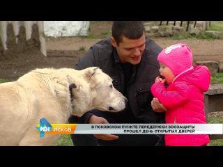 РЕН Новости Псков от  # День открытых дверей в Псковском пункте передержки животных