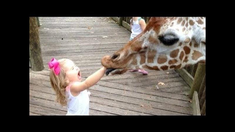 동물원에서 아이를 아빠에게 맡기면 안되는 이유ㅋㅋ
