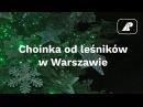 Choinka od leśników w Warszawie