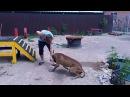 Студенты НГАУ проходят практику в ЦСиВЖ «Территория Животных».