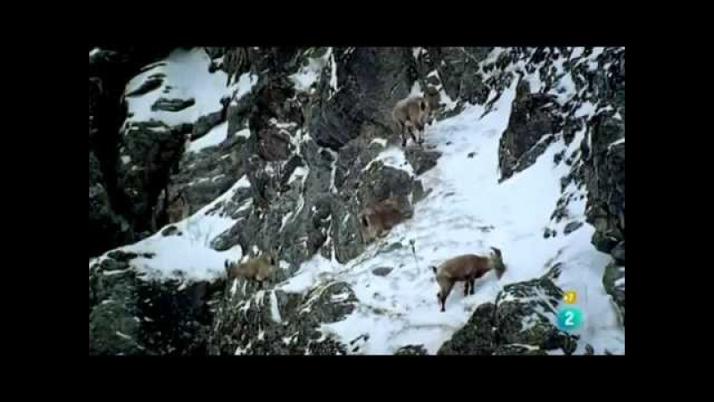 Los Alpes El Reino del Águila Real [Ep2] Cumbres de Vida