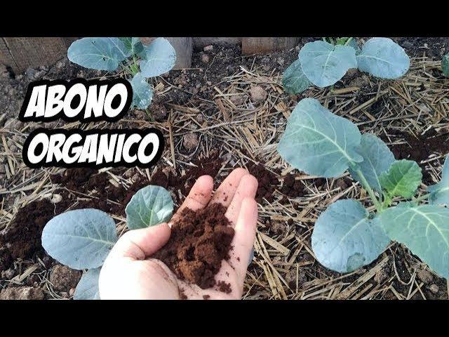 Potente Abono Casero para Nuestras Plantas | Experimentos
