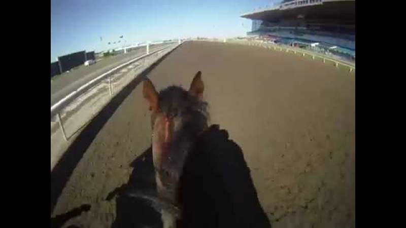 Racehorse training in the Morning