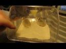 Хомячки Роборовского кремового окраса самцы 1 мес
