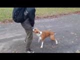 Рей. Очень полезное упражнение. Разминка не только для координации собаки, но и отличная нагрузка для спины.