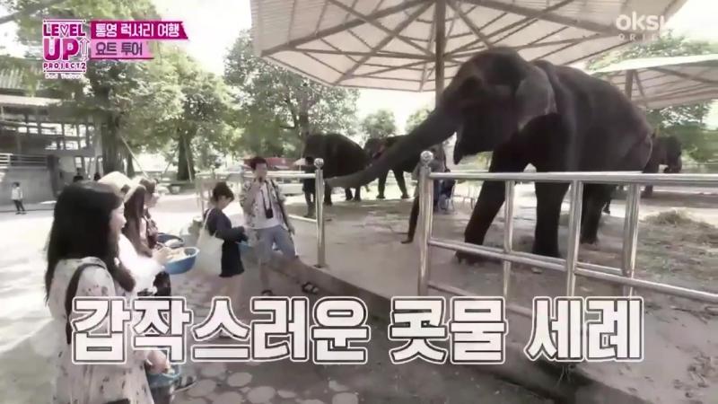 Венди и животные