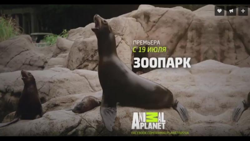 Канал Animal Planet: Зоопарк