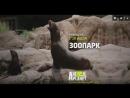 Канал Animal Planet Зоопарк