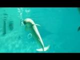 Подводные вейперы.mp4