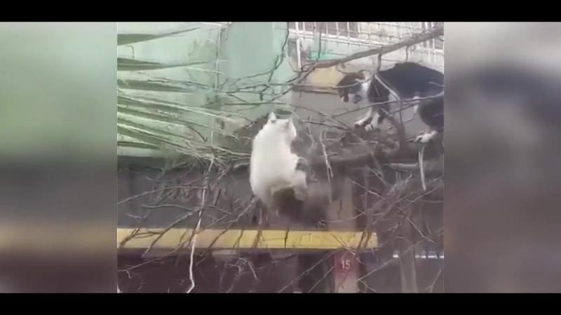 Кот ебака-неудачник