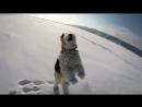 Пробежка через Волгу с веселой собачкой :)