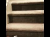 Собака-акробат (6 sec)