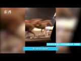 Nine runaway horses seen galloping on overpass at night in east China