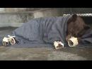 Edible bandages for bears' burnt paws BBC News
