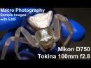 Tokina 100mm f2 8 macro Nikon D750 sample images Handheld macro photography in nature