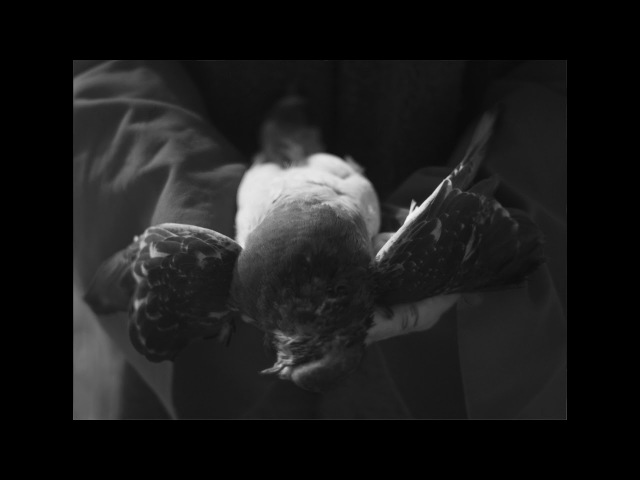 AMENRA A Solitary Reign (official videoclip)