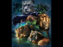 Olga Maslova Animal Planet