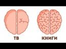 9 Доказательств Того Что Способности Мозга Можно Развить