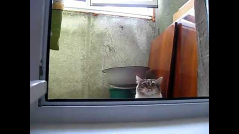 Кот фсбэшник